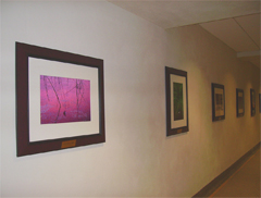 : The Jim Brandenburg photos on 2nd floor Somsen features images shot in Minnesota.